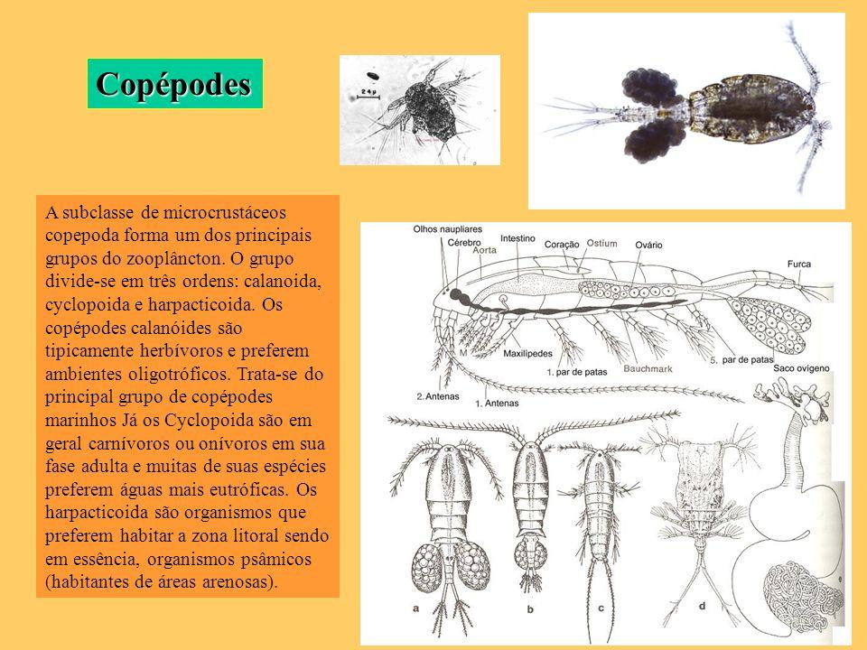 A subclasse de microcrustáceos copepoda forma um dos principais grupos do zooplâncton. O grupo divide-se em três ordens: calanoida, cyclopoida e harpa