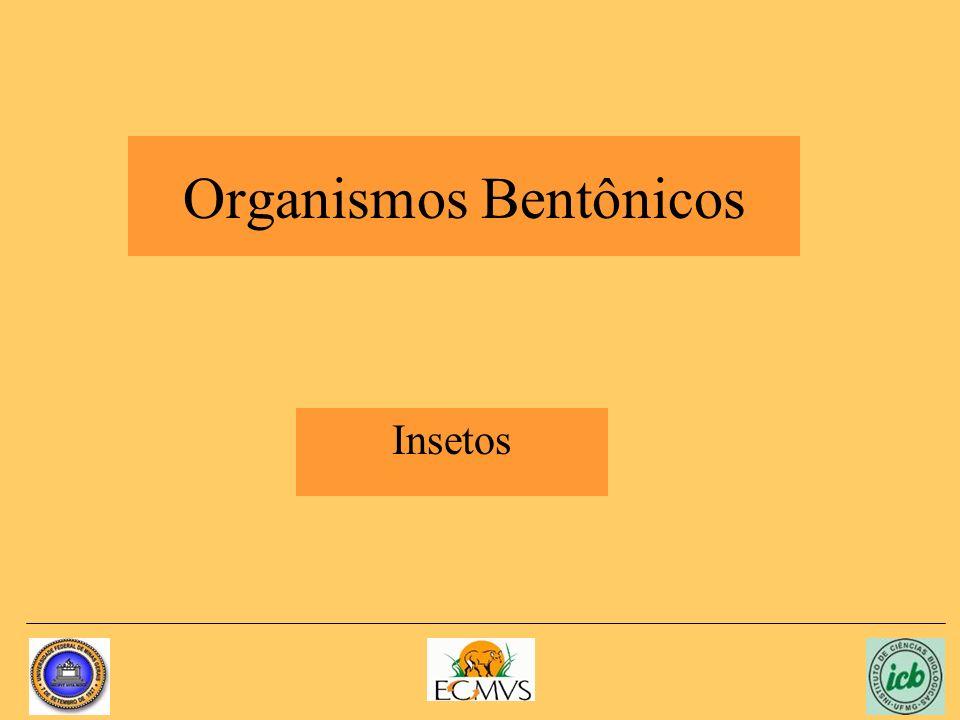 Organismos Bentônicos Insetos