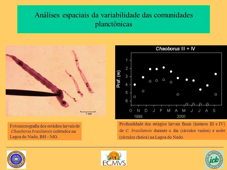 Análises espaciais da variabilidade das comunidades planctônicas Fotomicrografia dos estádios larvais de Chaoborus brasiliensis coletados na Lagoa do