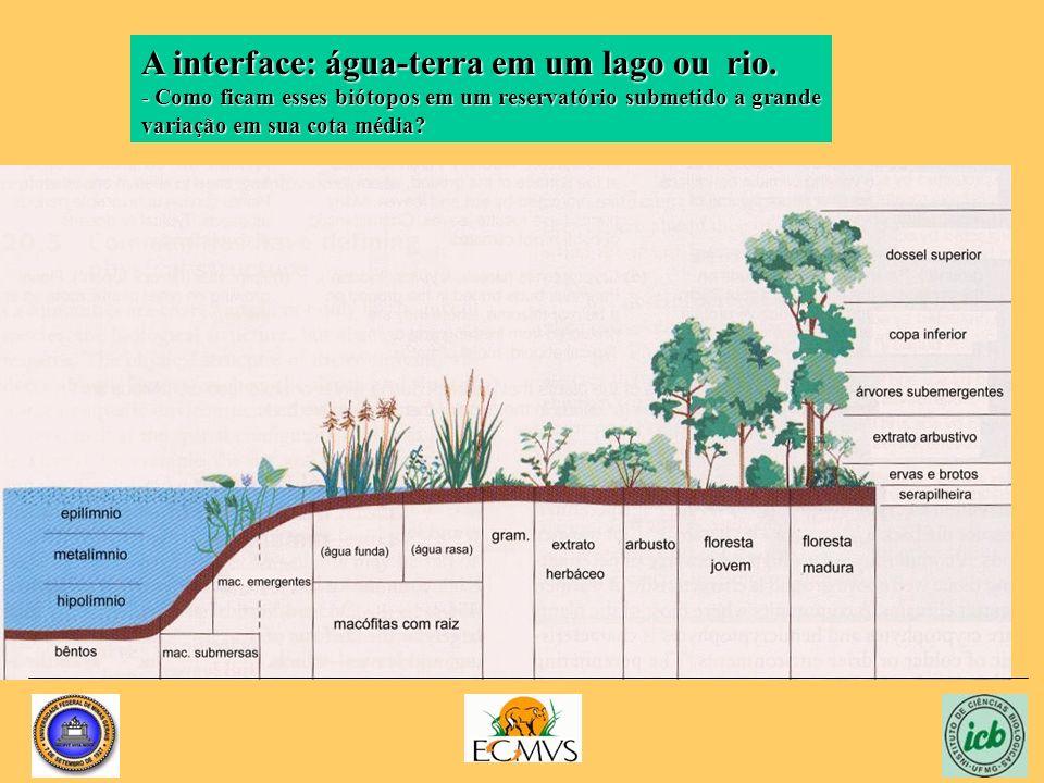 A interface: água-terra em um lago ou rio. - Como ficam esses biótopos em um reservatório submetido a grande variação em sua cota média?