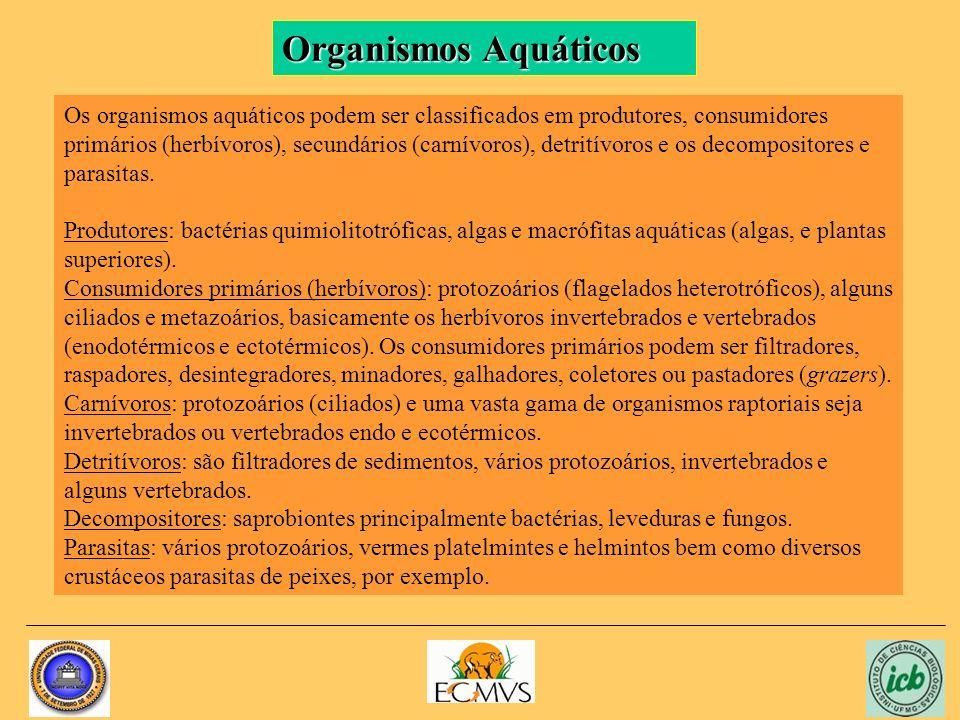 Organismos Aquáticos Os organismos aquáticos podem ser classificados em produtores, consumidores primários (herbívoros), secundários (carnívoros), det