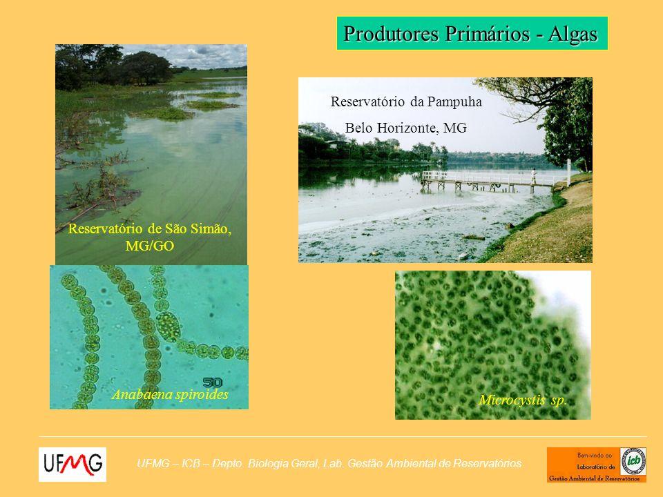 UFMG – ICB – Depto. Biologia Geral, Lab. Gestão Ambiental de Reservatórios Produtores Primários - Algas Reservatório de São Simão, MG/GO Anabaena spir