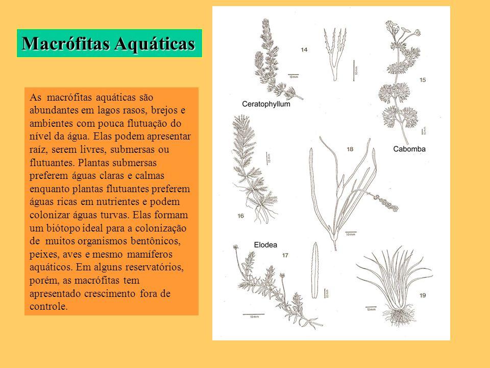 Macrófitas Aquáticas As macrófitas aquáticas são abundantes em lagos rasos, brejos e ambientes com pouca flutuação do nível da água. Elas podem aprese