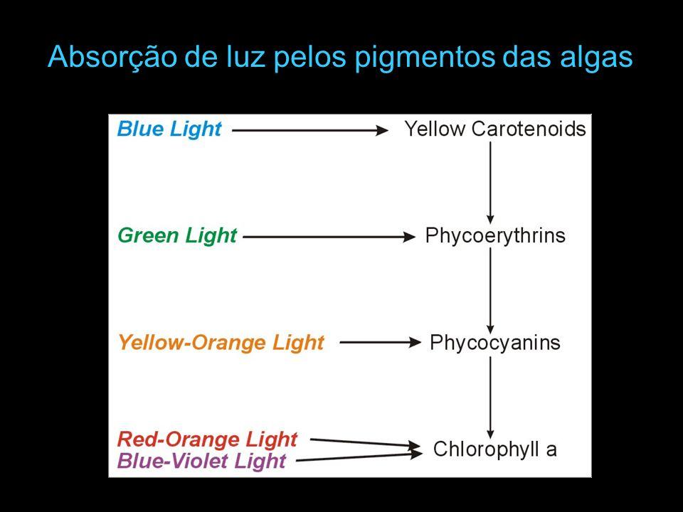 Absorção de luz pelos pigmentos das algas