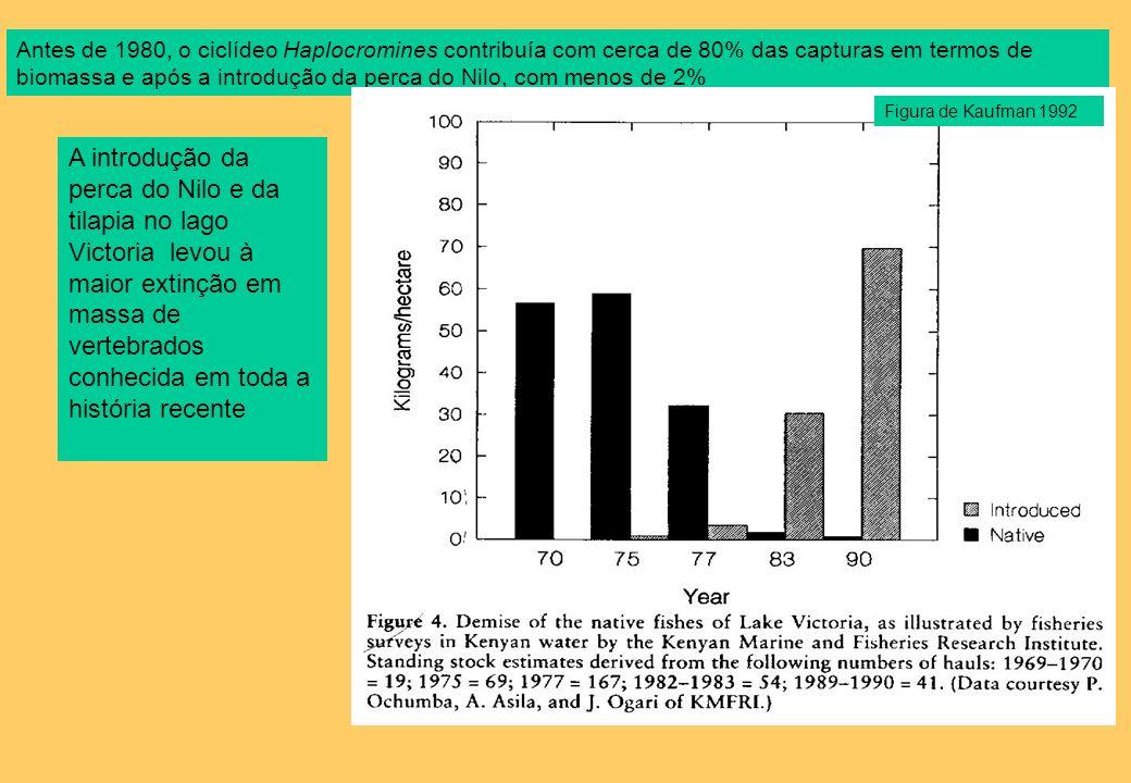 Antes de 1980, o ciclídeo Haplocromines contribuía com cerca de 80% das capturas em termos de biomassa e após a introdução da perca do Nilo, com menos