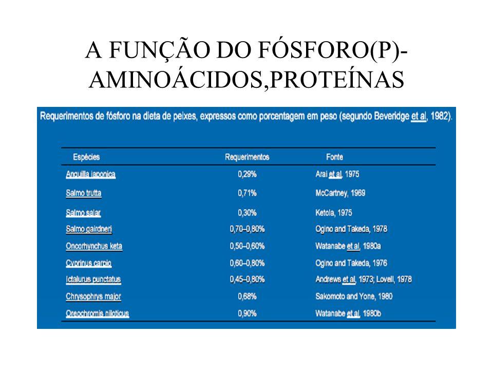 A FUNÇÃO DO FÓSFORO(P)- AMINOÁCIDOS,PROTEÍNAS