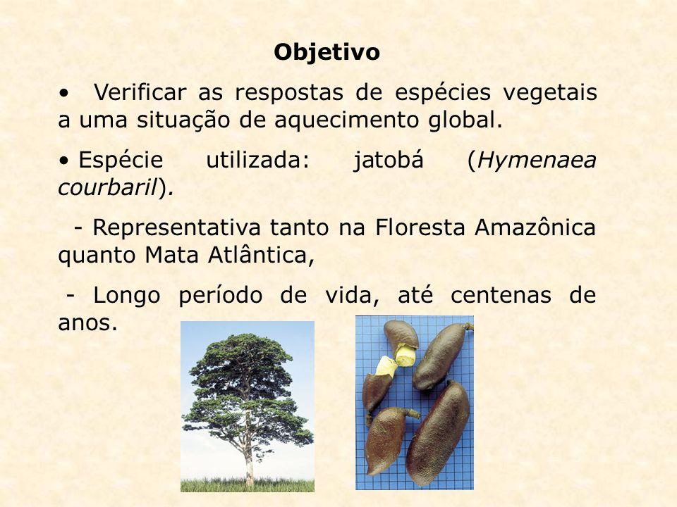 Objetivo Verificar as respostas de espécies vegetais a uma situação de aquecimento global. Espécie utilizada: jatobá (Hymenaea courbaril). - Represent