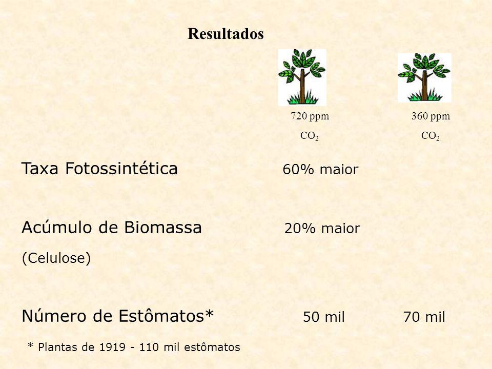 Resultados Taxa Fotossintética 60% maior Acúmulo de Biomassa 20% maior (Celulose) Número de Estômatos* 50 mil 70 mil * Plantas de 1919 - 110 mil estôm