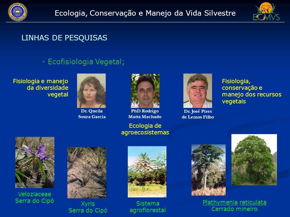 Ecologia, Conservação e Manejo da Vida Silvestre LINHAS DE PESQUISAS - Ecofisiologia Vegetal; Dr. José Pires de Lemos Filho Dr. Queila Souza Garcia Fi