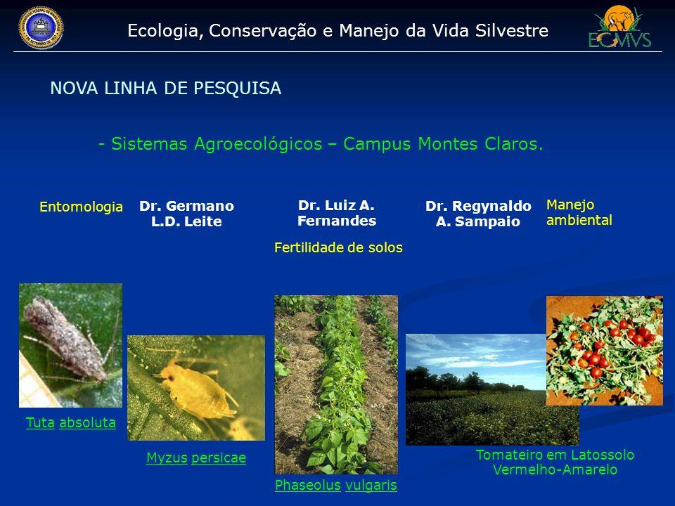 Ecologia, Conservação e Manejo da Vida Silvestre NOVA LINHA DE PESQUISA - Sistemas Agroecológicos – Campus Montes Claros. Dr. Germano L.D. Leite Entom