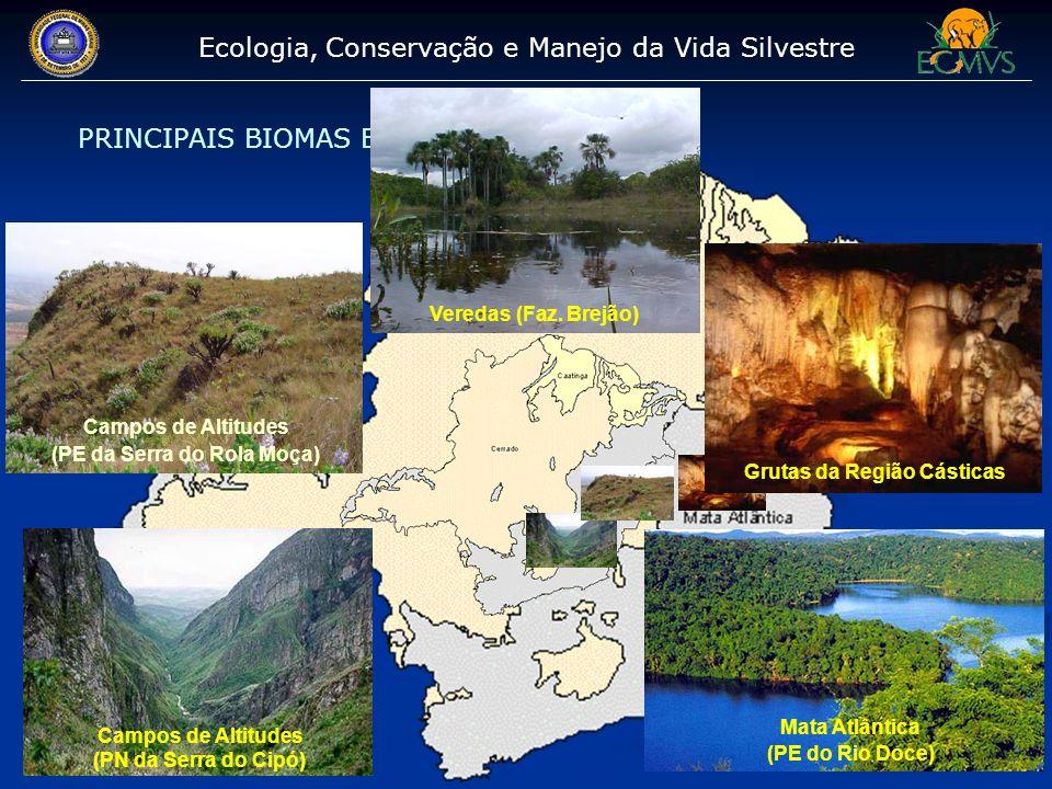 Ecologia, Conservação e Manejo da Vida Silvestre PRINCIPAIS BIOMAS ESTUDADOS Grutas da Região Cásticas Campos de Altitudes (PN da Serra do Cipó) Mata