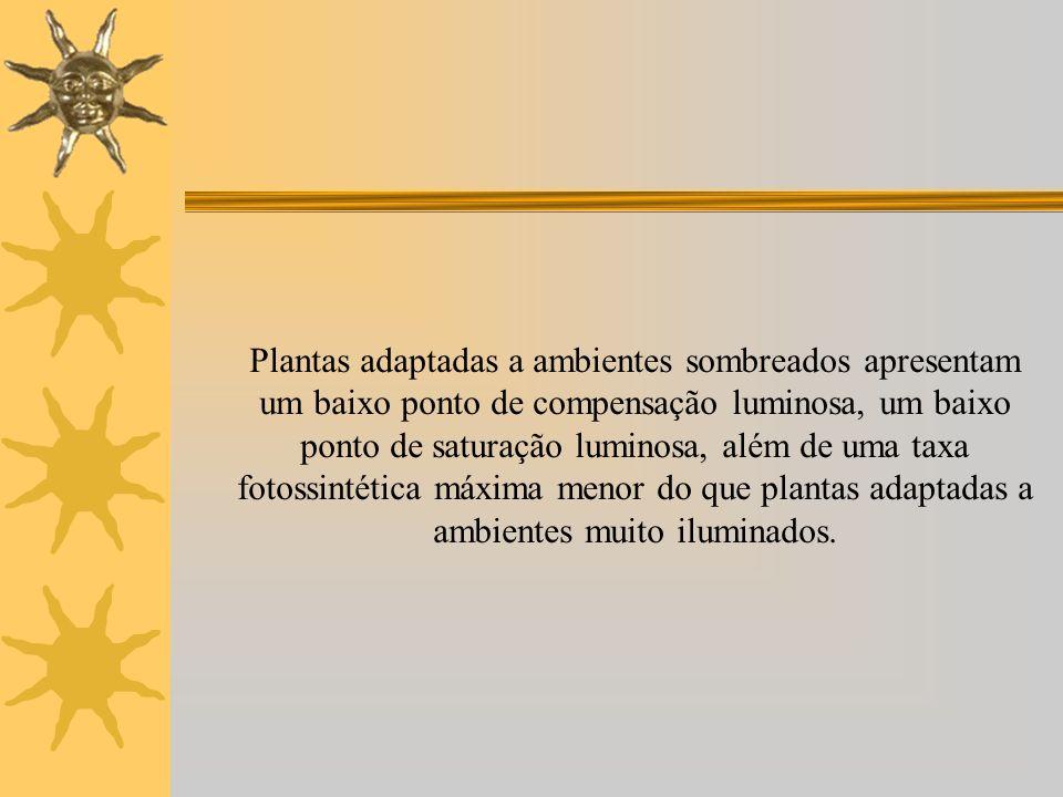 Plantas adaptadas a ambientes sombreados apresentam um baixo ponto de compensação luminosa, um baixo ponto de saturação luminosa, além de uma taxa fot