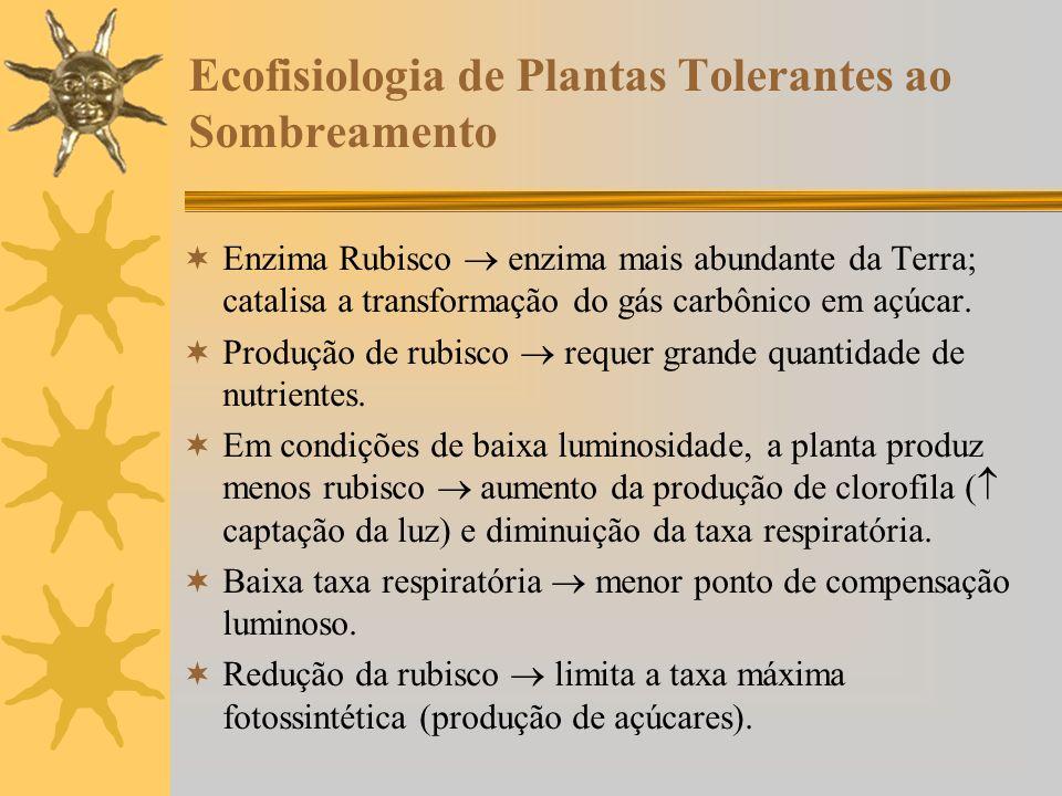 Ecofisiologia de Plantas Tolerantes ao Sombreamento Enzima Rubisco enzima mais abundante da Terra; catalisa a transformação do gás carbônico em açúcar