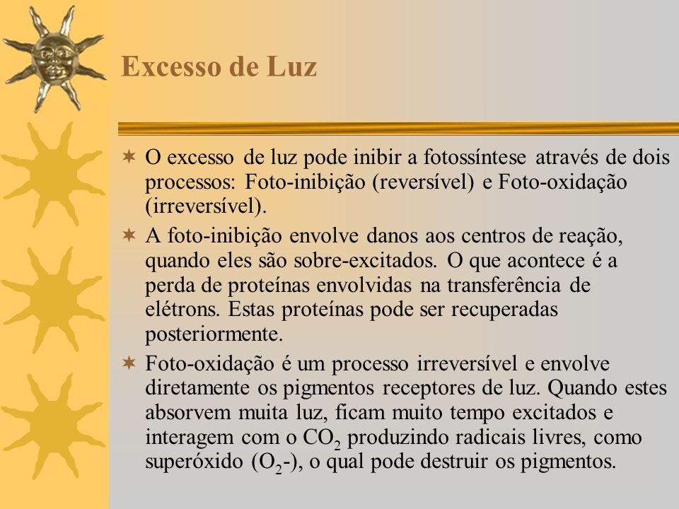 Excesso de Luz O excesso de luz pode inibir a fotossíntese através de dois processos: Foto-inibição (reversível) e Foto-oxidação (irreversível). A fot
