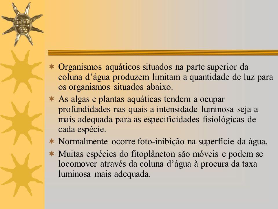 Organismos aquáticos situados na parte superior da coluna dágua produzem limitam a quantidade de luz para os organismos situados abaixo. As algas e pl