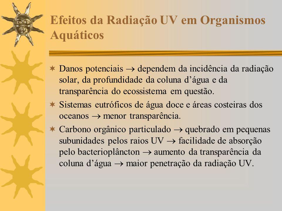 Efeitos da Radiação UV em Organismos Aquáticos Danos potenciais dependem da incidência da radiação solar, da profundidade da coluna dágua e da transpa