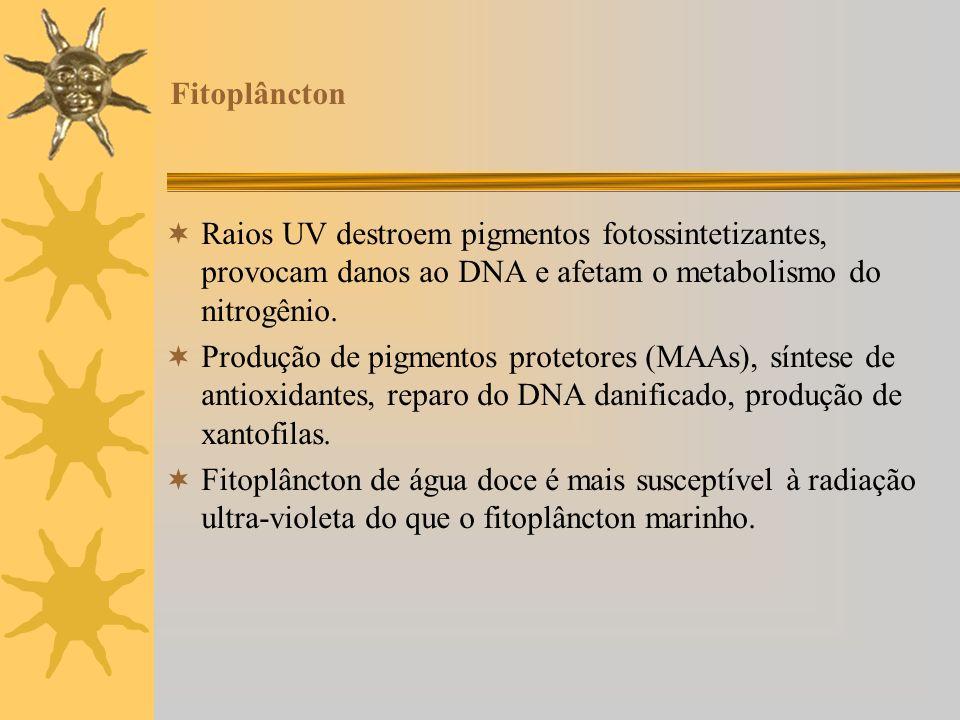 Fitoplâncton Raios UV destroem pigmentos fotossintetizantes, provocam danos ao DNA e afetam o metabolismo do nitrogênio. Produção de pigmentos proteto
