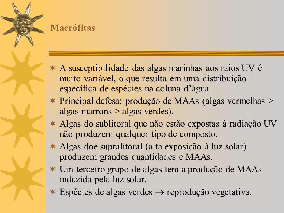 Macrófitas A susceptibilidade das algas marinhas aos raios UV é muito variável, o que resulta em uma distribuição específica de espécies na coluna dág