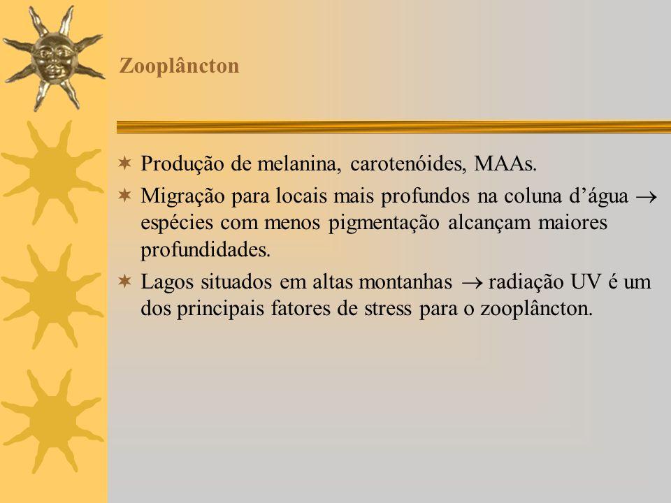 Zooplâncton Produção de melanina, carotenóides, MAAs. Migração para locais mais profundos na coluna dágua espécies com menos pigmentação alcançam maio