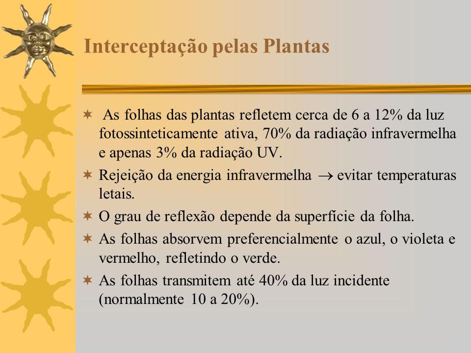 Interceptação pelas Plantas As folhas das plantas refletem cerca de 6 a 12% da luz fotossinteticamente ativa, 70% da radiação infravermelha e apenas 3