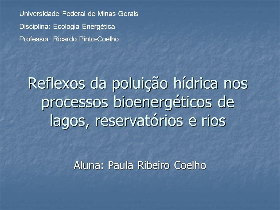 Reflexos da poluição hídrica nos processos bioenergéticos de lagos, reservatórios e rios Aluna: Paula Ribeiro Coelho Universidade Federal de Minas Ger