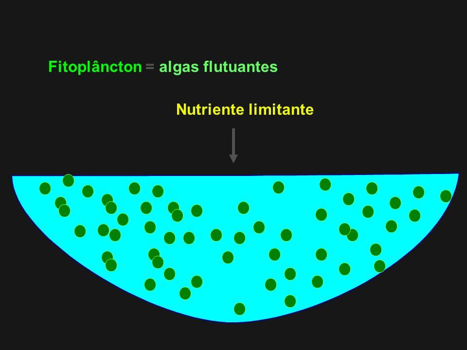 Fitoplâncton = algas flutuantes Nutriente limitante
