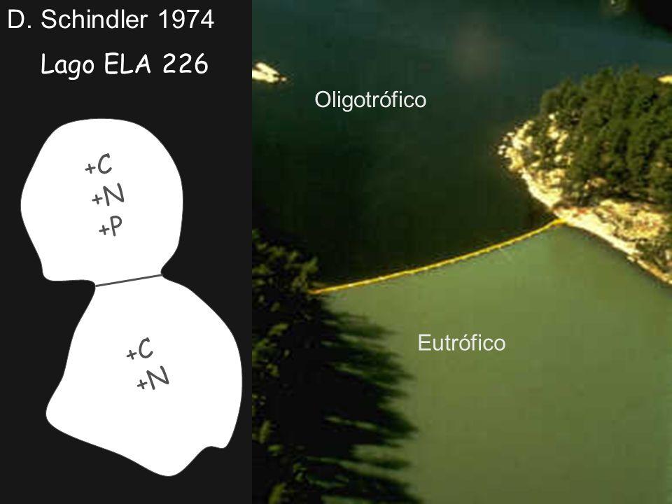 Lago ELA 226 D. Schindler 1974 +C +N +P +C +N Oligotrófico Eutrófico