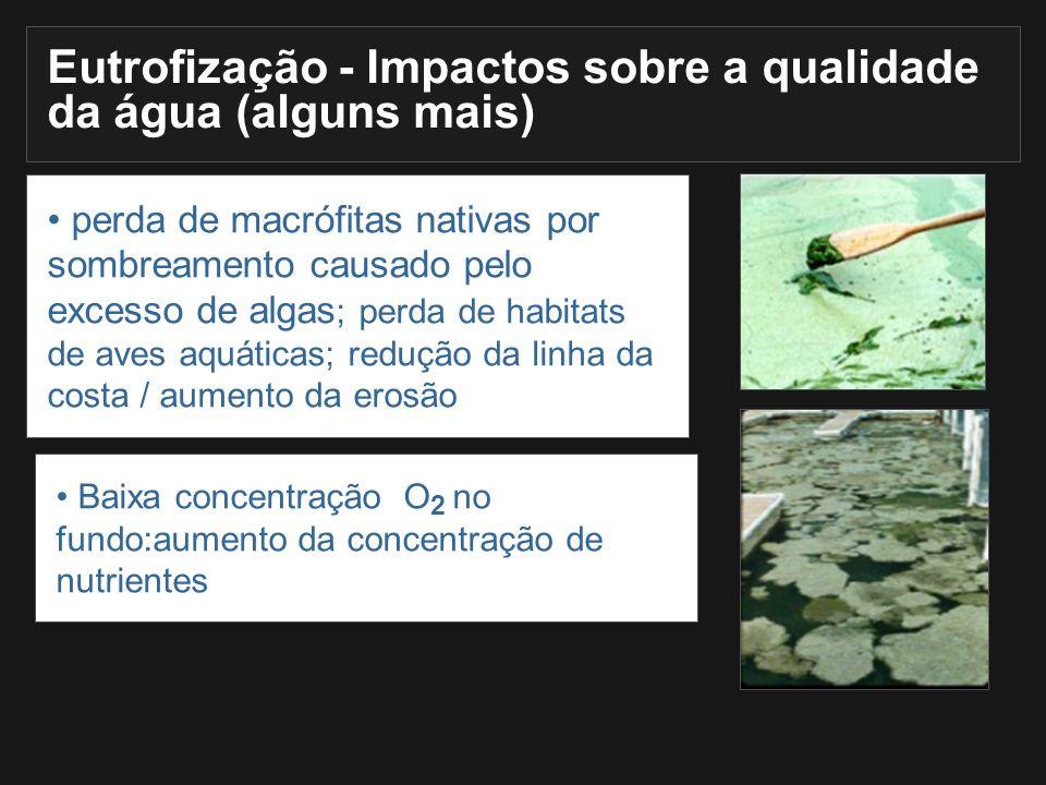 perda de macrófitas nativas por sombreamento causado pelo excesso de algas ; perda de habitats de aves aquáticas; redução da linha da costa / aumento