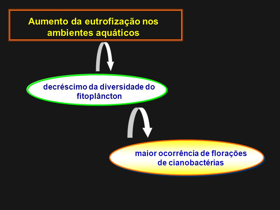 decréscimo da diversidade do fitoplâncton Aumento da eutrofização nos ambientes aquáticos maior ocorrência de florações de cianobactérias