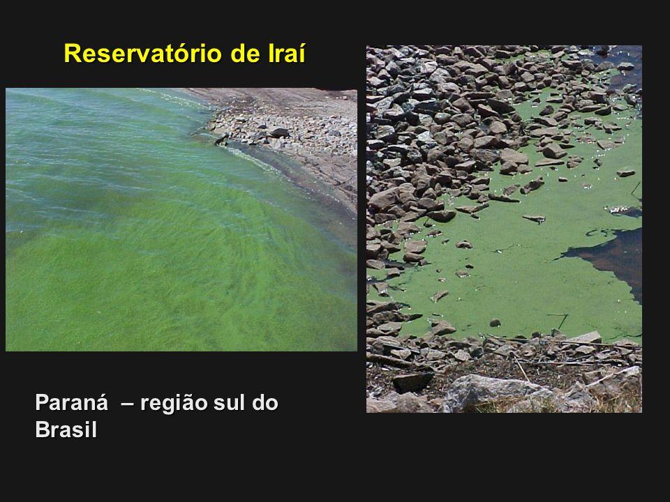 Paraná – região sul do Brasil Reservatório de Iraí