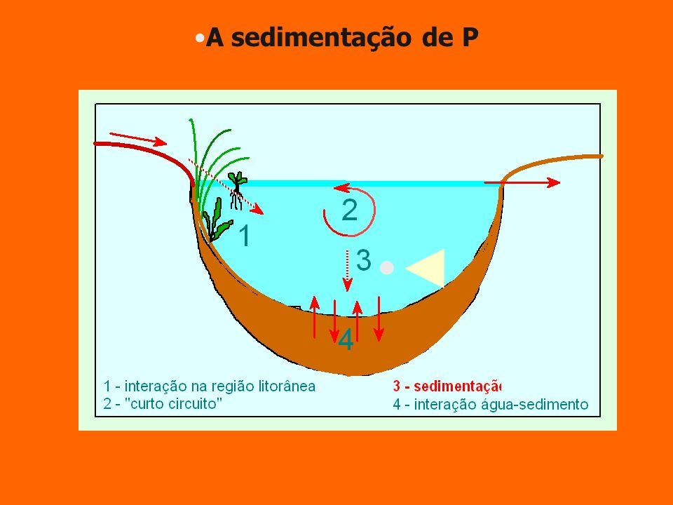 A sedimentação de P