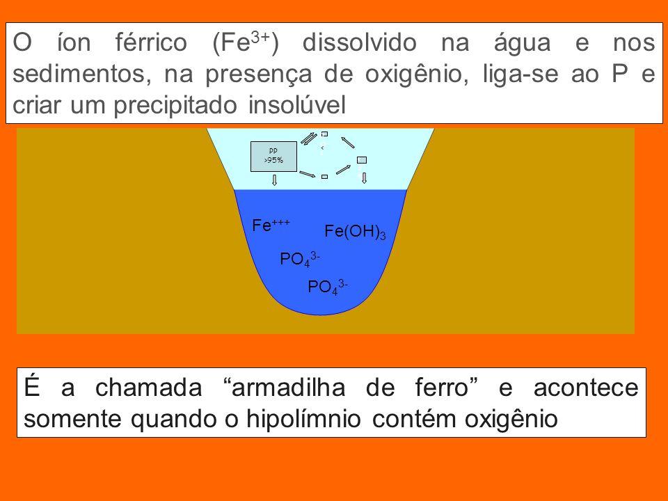 PO43- Fe +++ Fe(OH) 3 PO 4 3- O íon férrico (Fe 3+ ) dissolvido na água e nos sedimentos, na presença de oxigênio, liga-se ao P e criar um precipitado insolúvel É a chamada armadilha de ferro e acontece somente quando o hipolímnio contém oxigênio PP >95% PO4PO4 < < <3%<3%