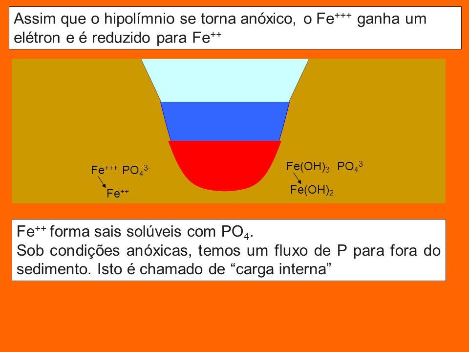 Assim que o hipolímnio se torna anóxico, o Fe +++ ganha um elétron e é reduzido para Fe ++ Fe+++ Fe(OH) 3 Fe ++ forma sais solúveis com PO 4.