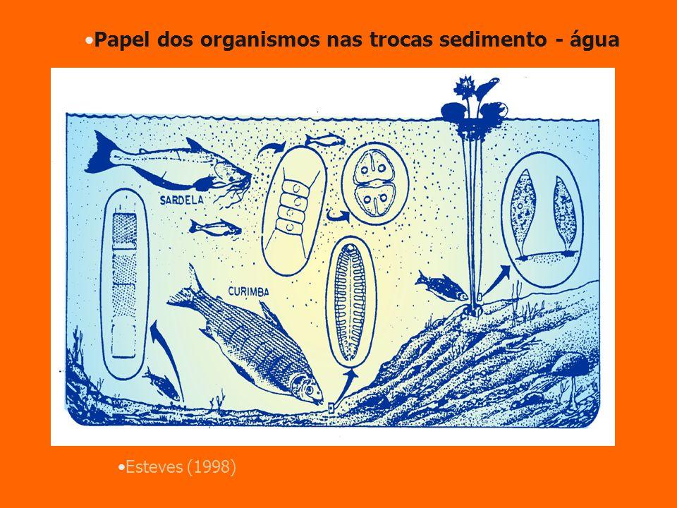 Esteves (1998) Papel dos organismos nas trocas sedimento - água bioturbação