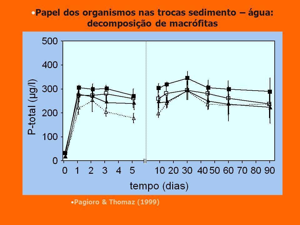 Pagioro & Thomaz (1999) Papel dos organismos nas trocas sedimento – água: decomposição de macrófitas