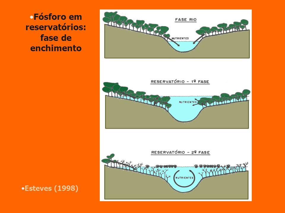 Esteves (1998) Fósforo em reservatórios: fase de enchimento