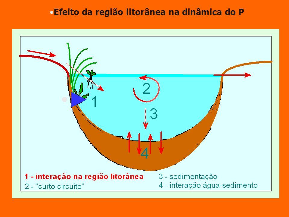 Efeito da região litorânea na dinâmica do P