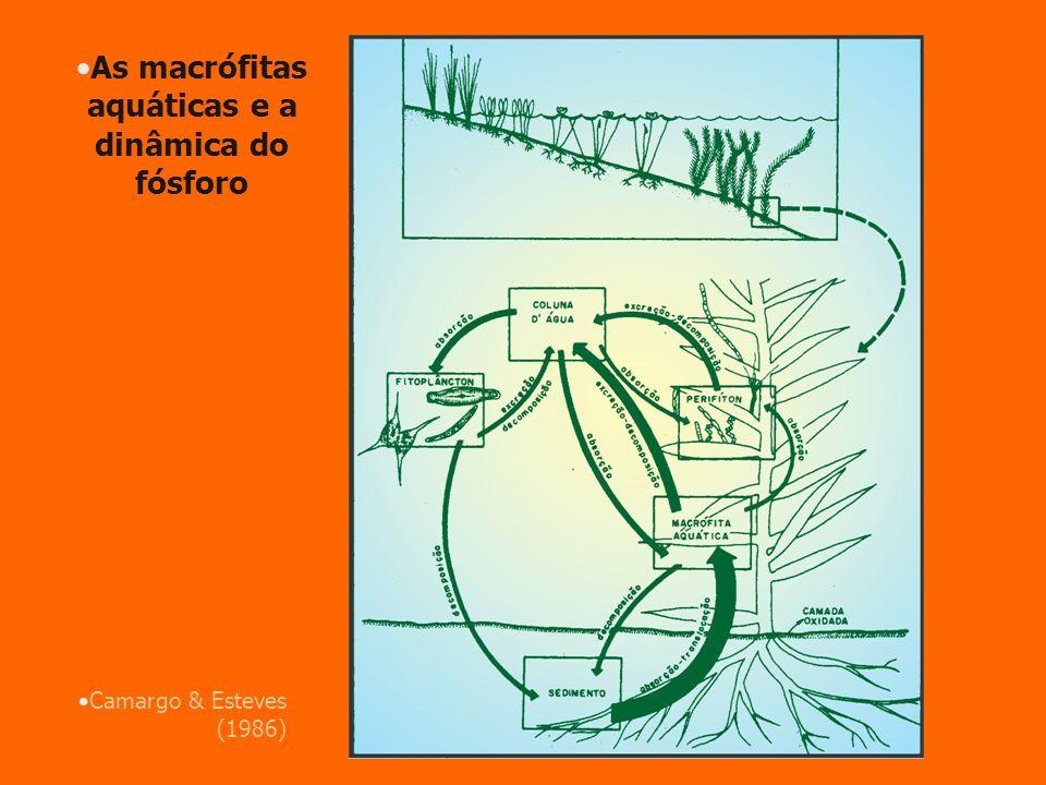 Camargo & Esteves (1986) As macrófitas aquáticas e a dinâmica do fósforo