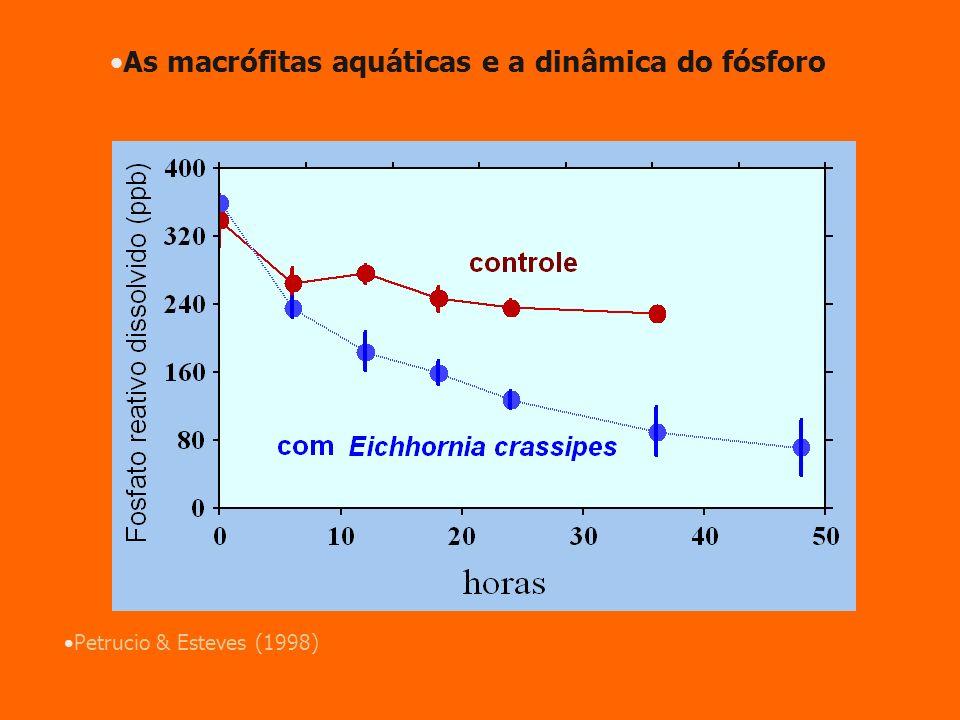Petrucio & Esteves (1998) As macrófitas aquáticas e a dinâmica do fósforo