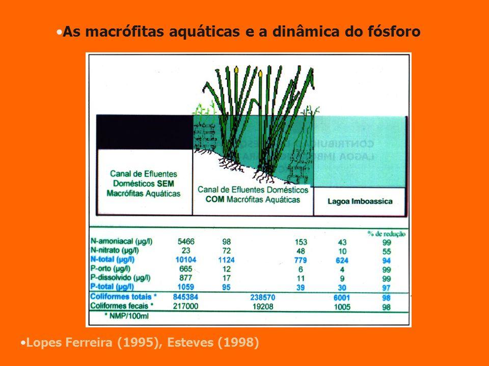 Lopes Ferreira (1995), Esteves (1998) As macrófitas aquáticas e a dinâmica do fósforo