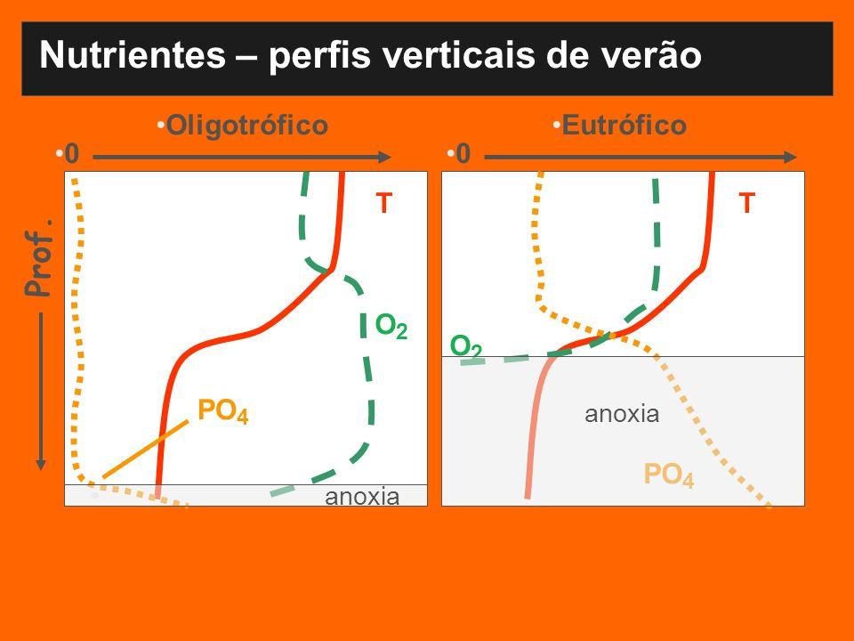 Nutrientes – perfis verticais de verão OligotróficoEutrófico TT O2O2 O 2 PO 4 Prof. 00 anoxia