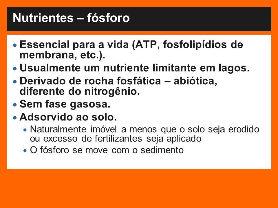 Nutrientes – fósforo Essencial para a vida (ATP, fosfolipídios de membrana, etc.).
