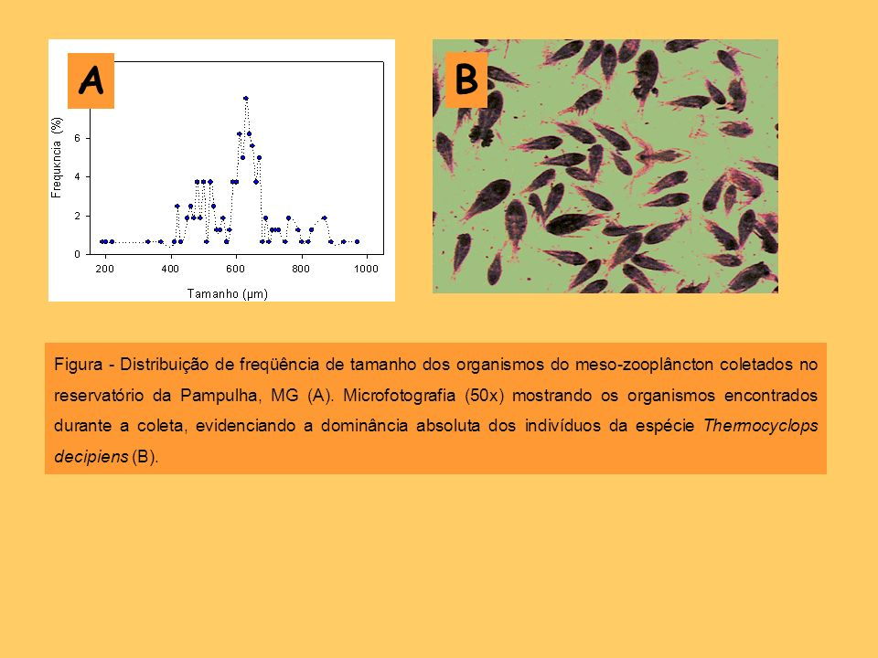 Figura - Distribuição de freqüência de tamanho dos organismos do meso-zooplâncton coletados no reservatório da Pampulha, MG (A). Microfotografia (50x)