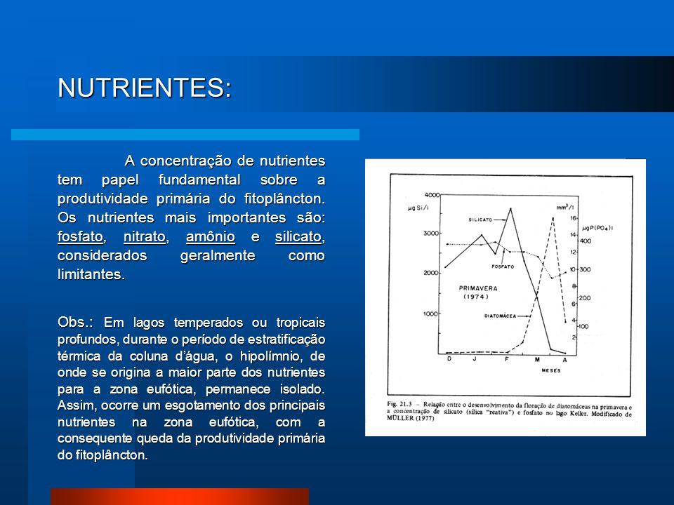 NUTRIENTES: A concentração de nutrientes tem papel fundamental sobre a produtividade primária do fitoplâncton. Os nutrientes mais importantes são: fos