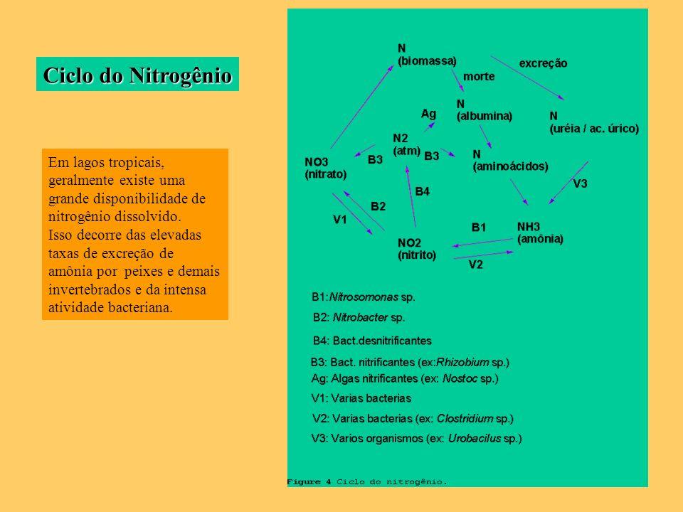 Ciclo do Nitrogênio Em lagos tropicais, geralmente existe uma grande disponibilidade de nitrogênio dissolvido.