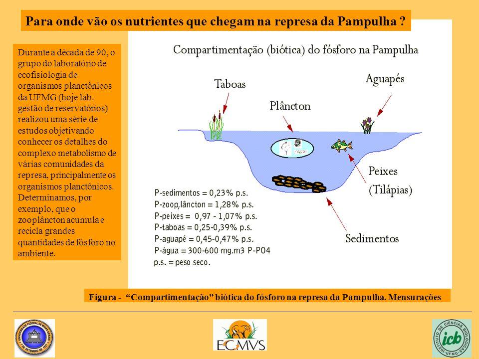 Figura - Compartimentação biótica do fósforo na represa da Pampulha.