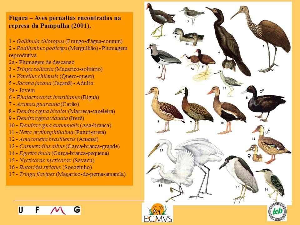 Figura – Aves pernaltas encontradas na represa da Pampulha (2001).