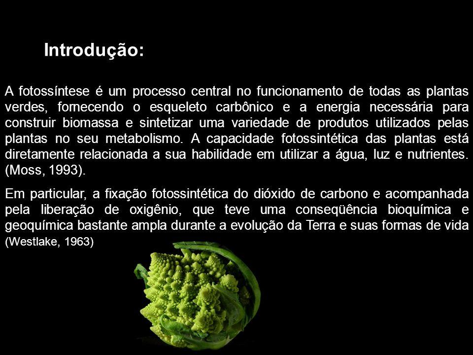 Introdução: A fotossíntese é um processo central no funcionamento de todas as plantas verdes, fornecendo o esqueleto carbônico e a energia necessária