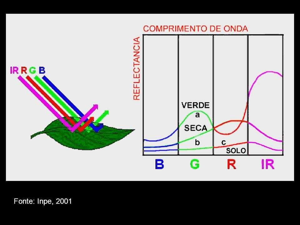 Para mensurar a absorção de CO2, em um indivíduo ex situ, é colocado em uma câmara clara, um tecido fotossintético.
