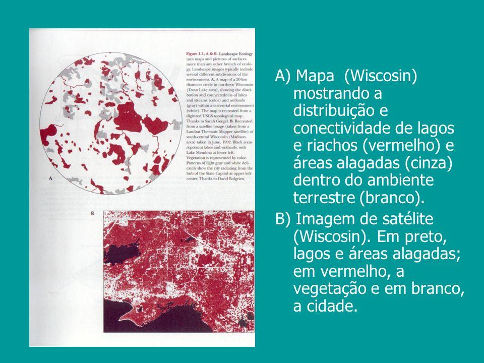 A) Mapa (Wiscosin) mostrando a distribuição e conectividade de lagos e riachos (vermelho) e áreas alagadas (cinza) dentro do ambiente terrestre (branc